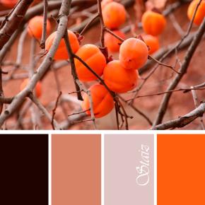 Палитра абрикосы осенью